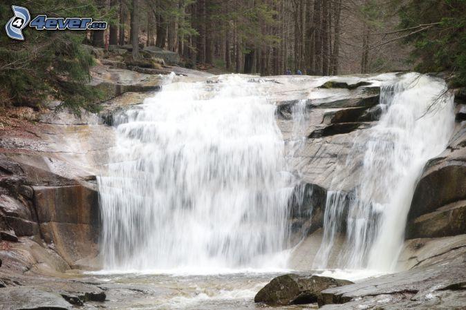 Mumlava waterfall, forest