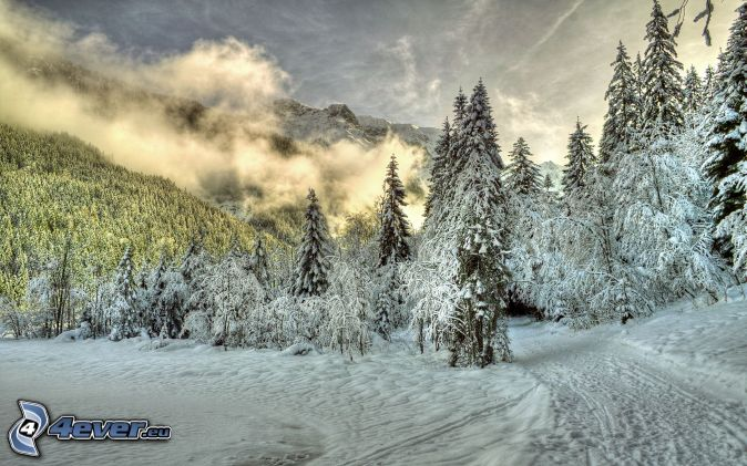Alps, snowy trees, forest road