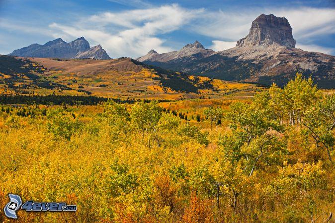 Chief Mountain, yellow autumn forest, rocky mountain