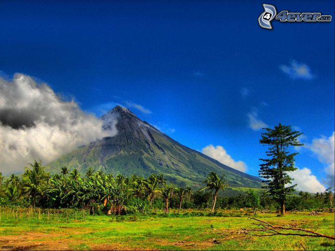 Mount Mayon, Philippines, volcano, meadow, palm trees
