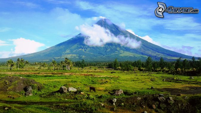 Mount Mayon, volcano, buffalo, meadow, forest, Philippines