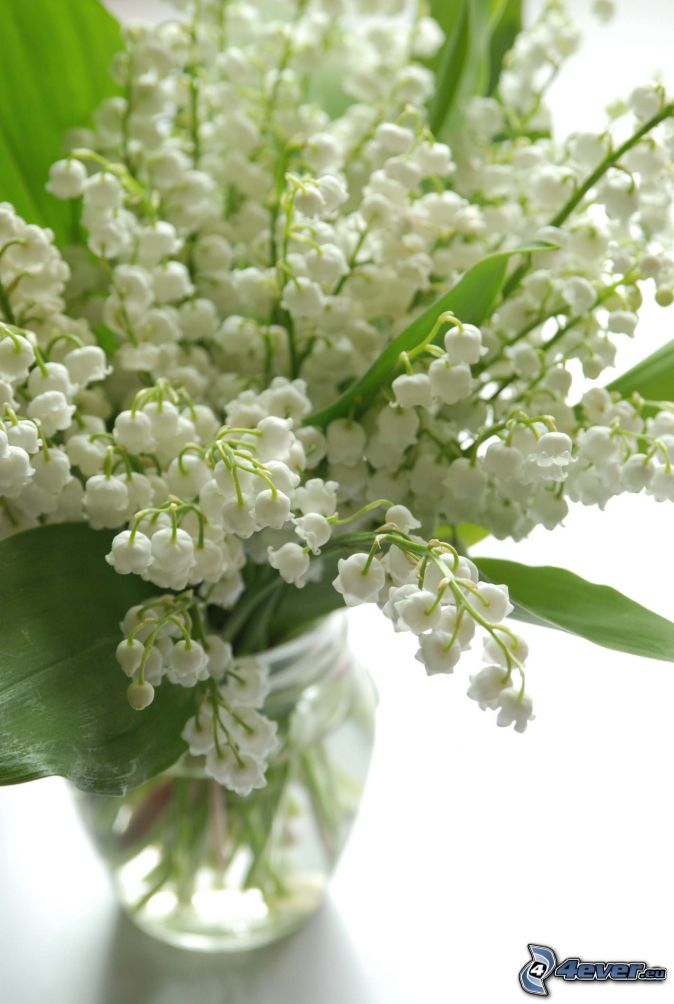 lily of the valley, vase, green leaves