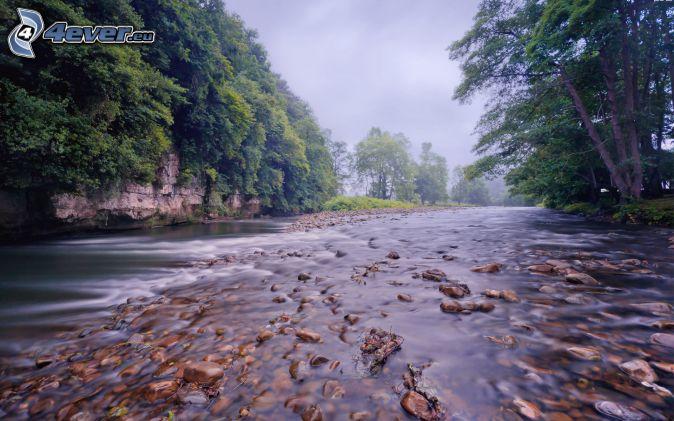River, rocks, forest