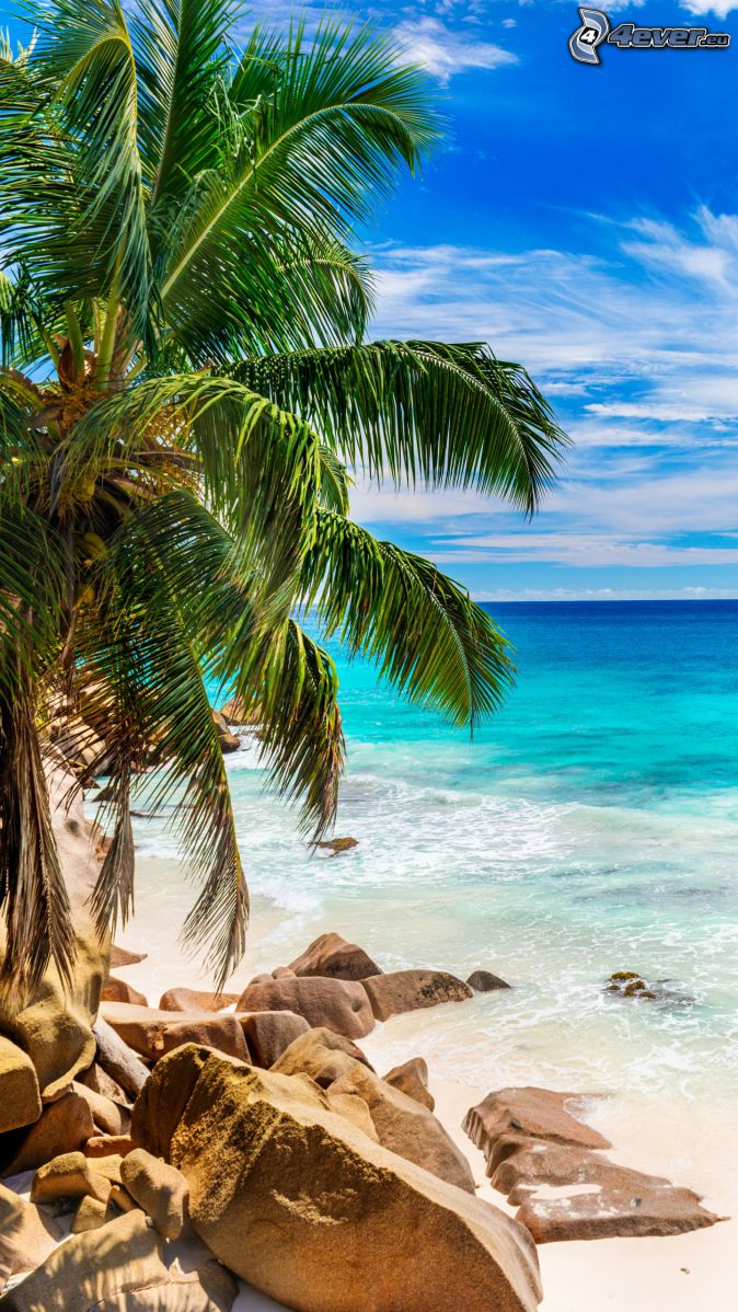 coast, rocks, palm tree, open sea
