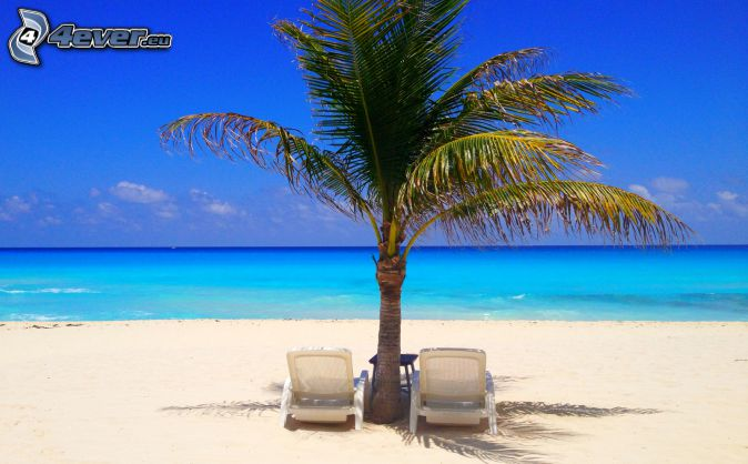 lounger, palm tree, open sea, sandy beach