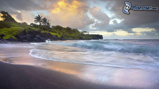 open sea, beach, greenery