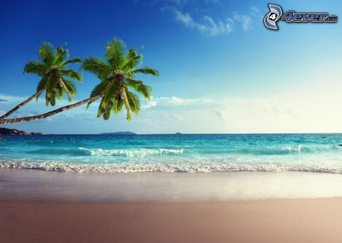 open sea, palm trees, sandy beach