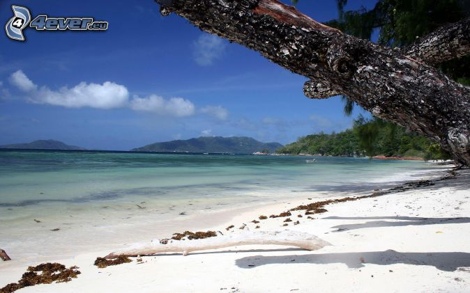 sandy beach, mountain, trees