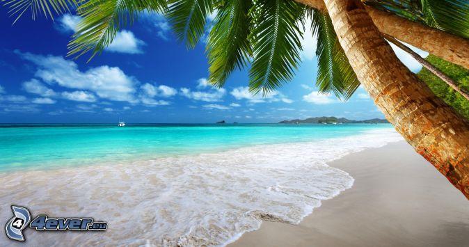 sandy beach, palm trees, open sea