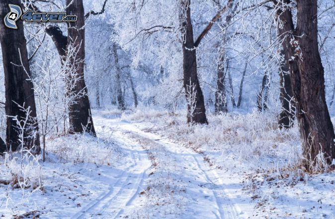 snow-covered road, forest