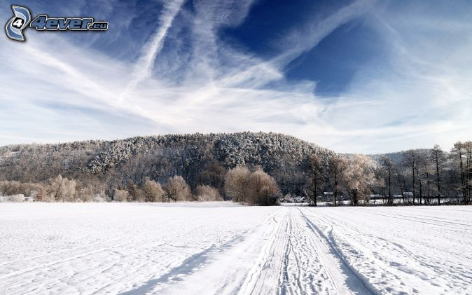 snowy forest, snowy meadow, tracks in the snow