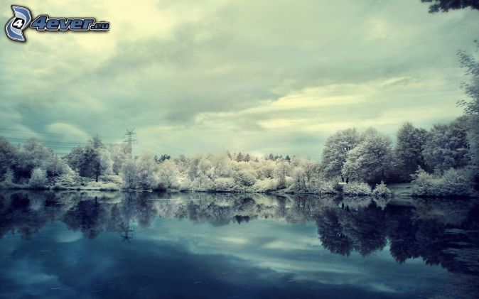 snowy trees, lake, reflection
