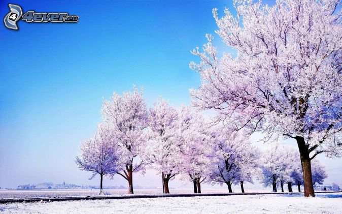 snowy trees, snowy meadow