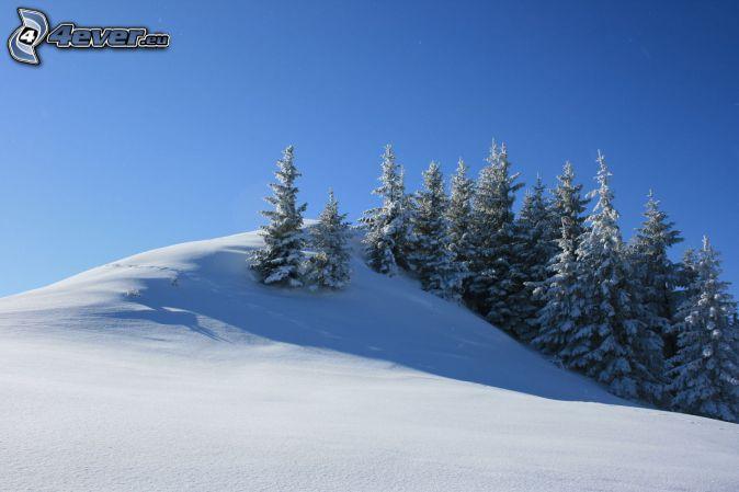 snowy trees, snowy meadow