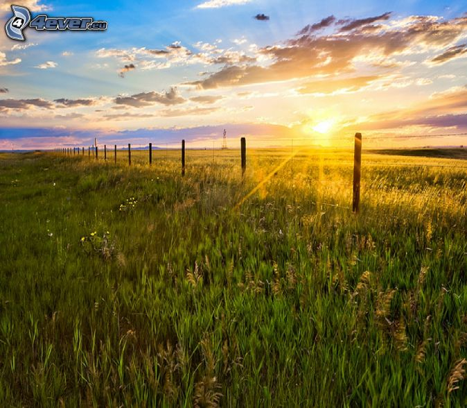 sunset in the meadow, grass, wire fence, clouds