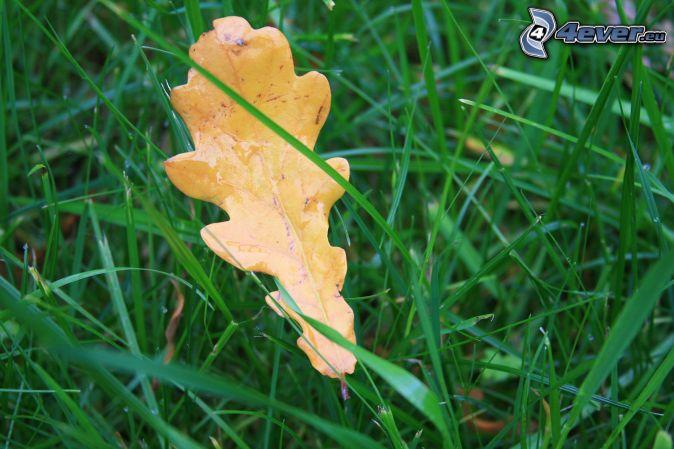 yellow leaf, grass