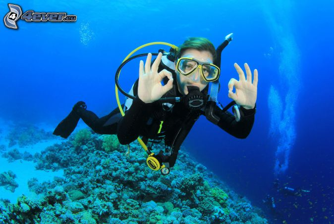 diver, corals, sea-bed