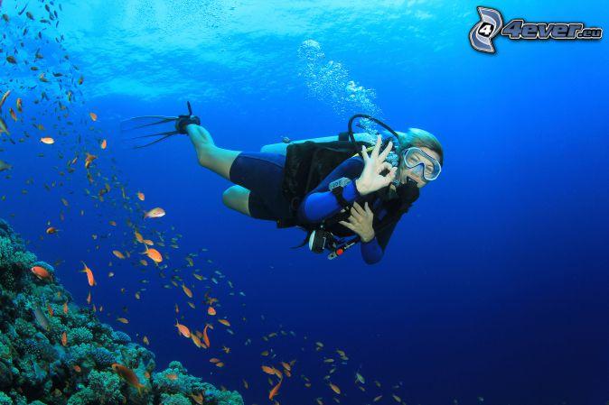 diver, shoal of fish, corals