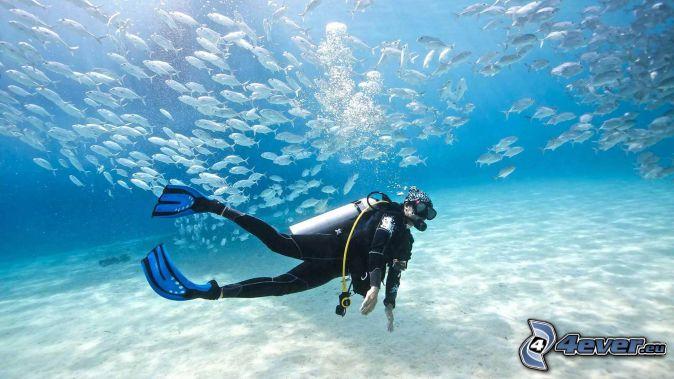 diver, shoal of fish