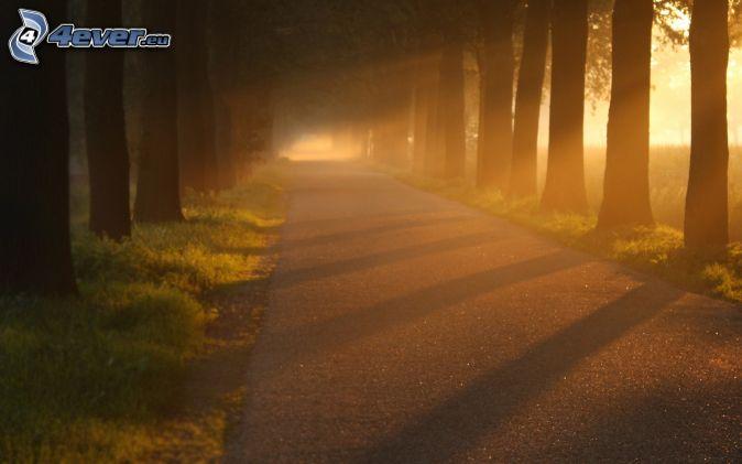 road, avenue of trees, sunbeams, sunset