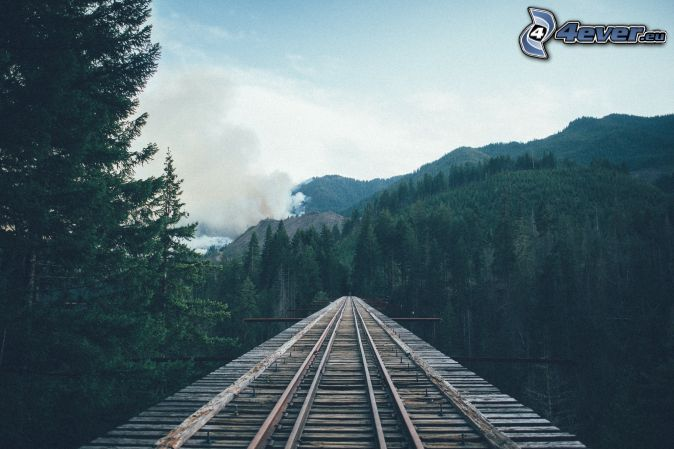 rails, coniferous forest