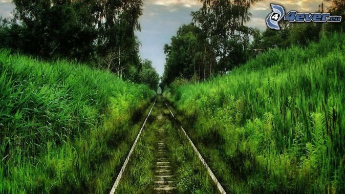 rails, forest, greenery
