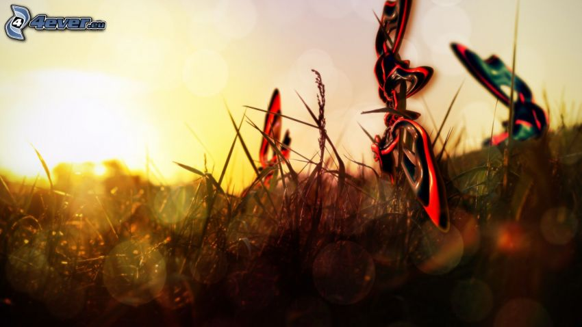 abstract shapes, sunset in the meadow, grass