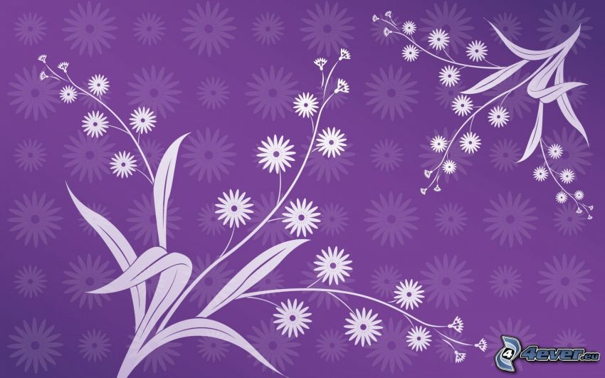 white flowers, purple background