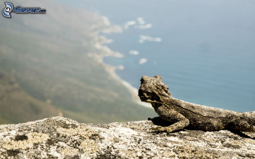 Agama, the view of the sea, coast, cliff