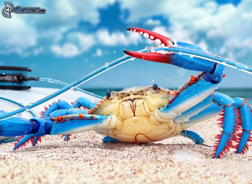 crab, cable, sandy beach