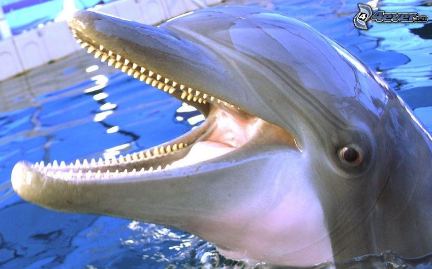 dolphin, teeth