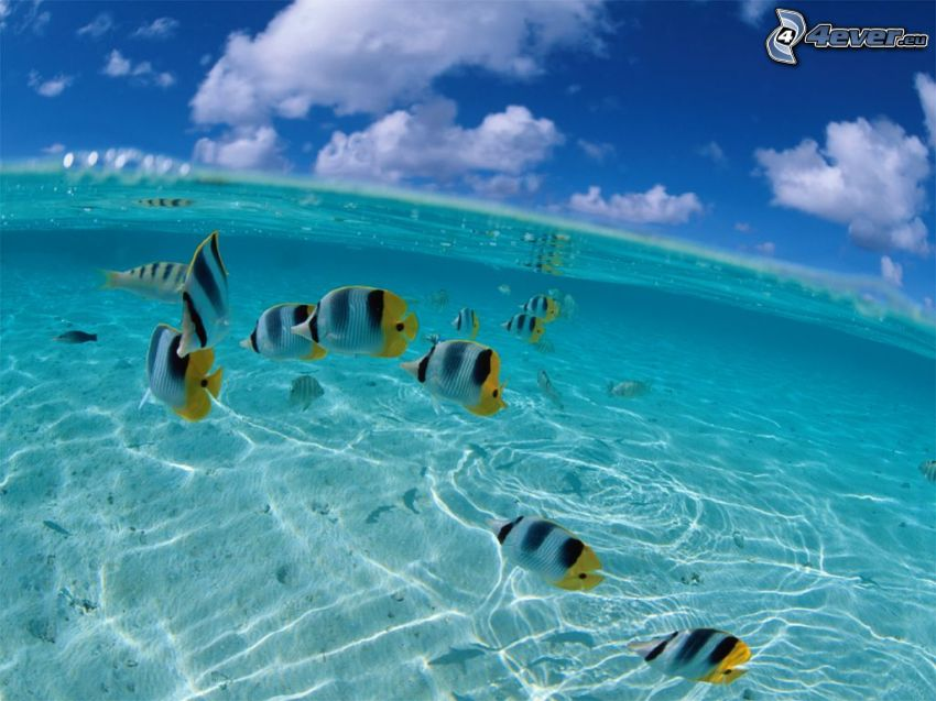 fish in a shallow sea, sky, water surface