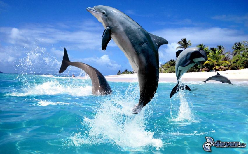 jumping dolphins, beach