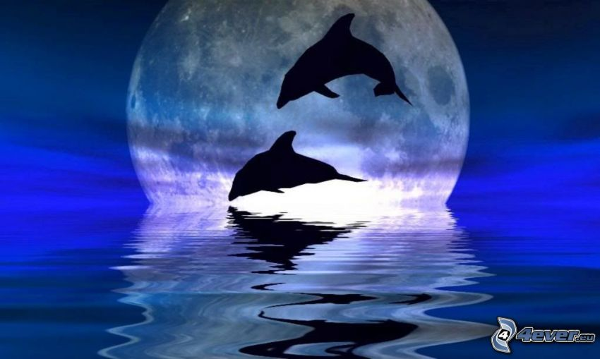 jumping dolphins, moon, silhouette