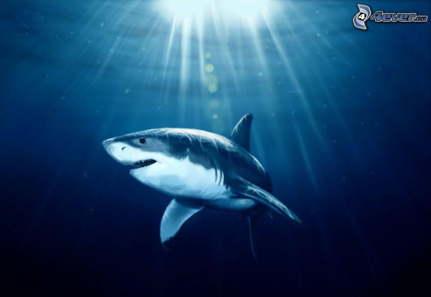 shark, sunbeams