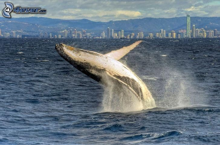whale, water