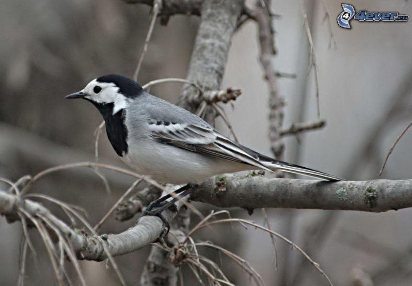 bird, branch