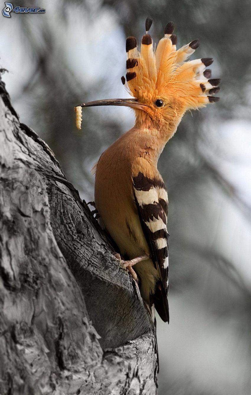 bird, caterpillar, branch