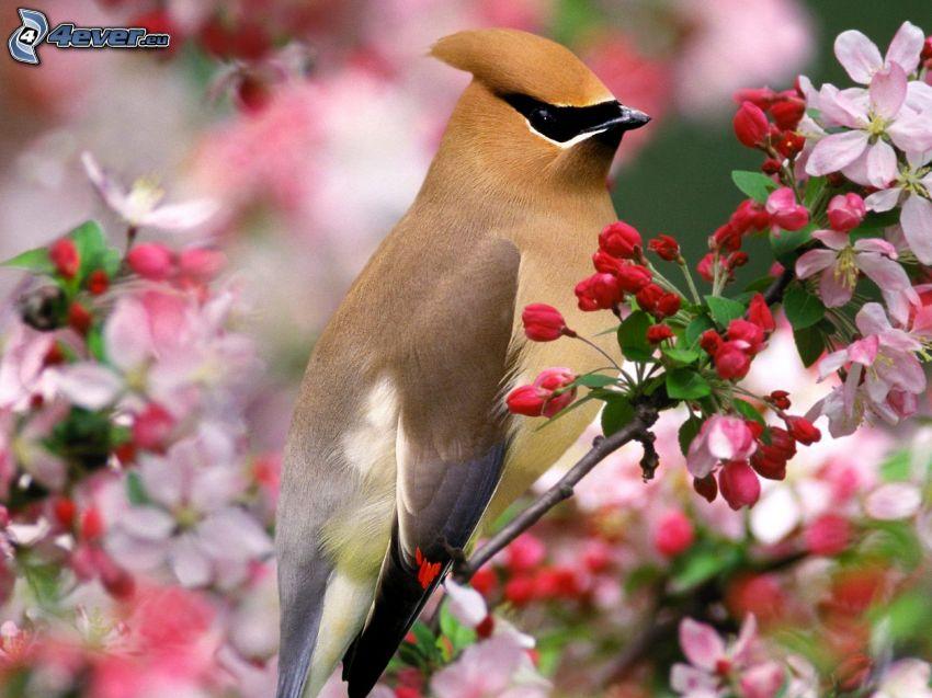 bird, flowery branch