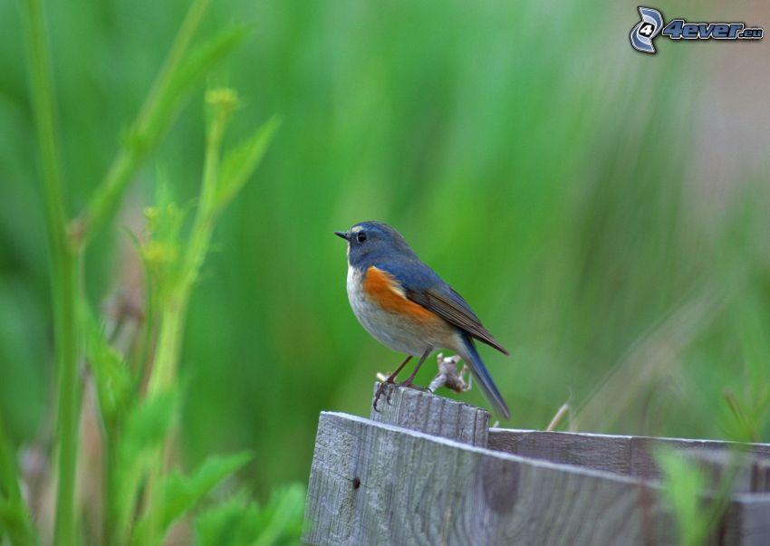bird, palings