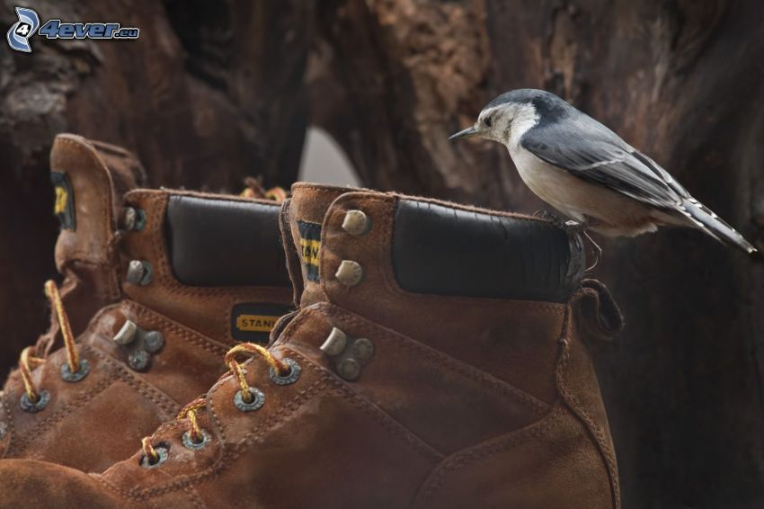 bird, shoes