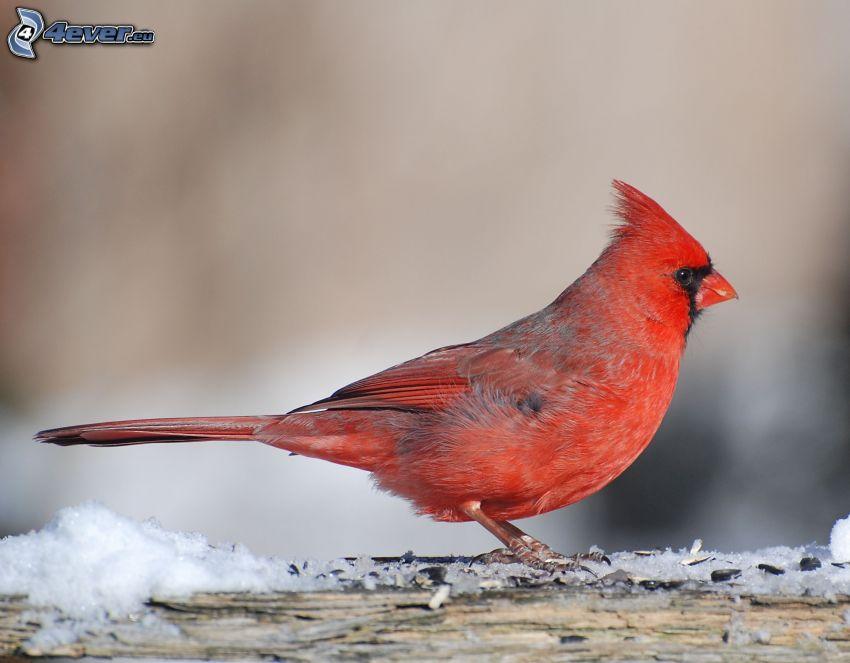bird, wood, snow