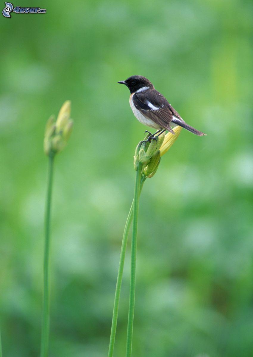 bird, yellow flower