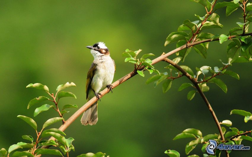 bird on a branch, leaves