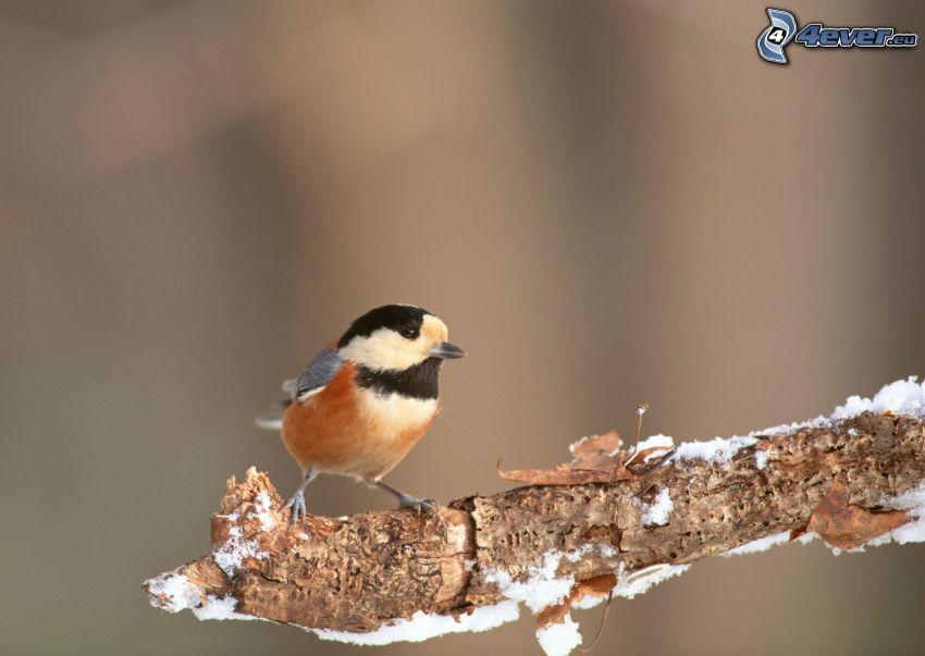 bird on a branch, snow