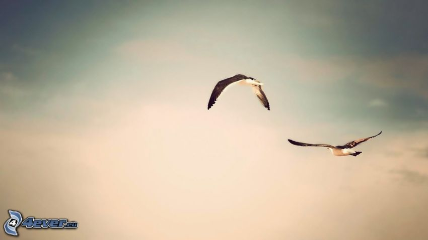 birds, flight