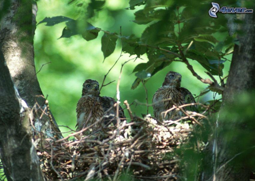 birds, nest