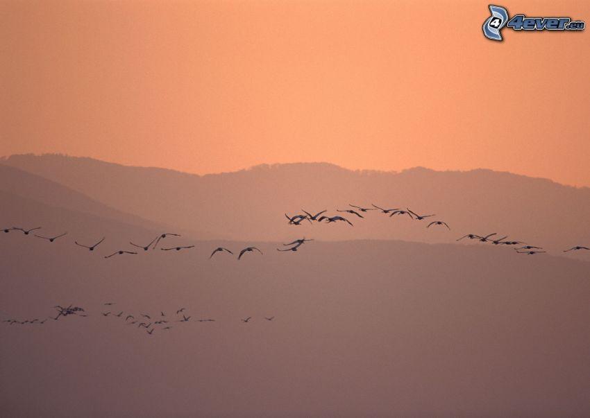 birds, silhouette
