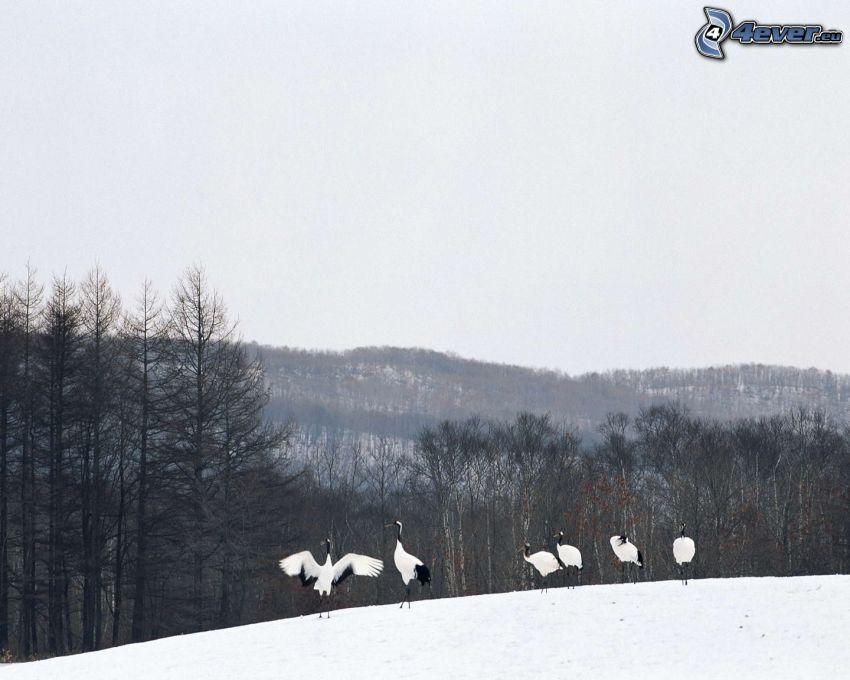 birds, snow, trees