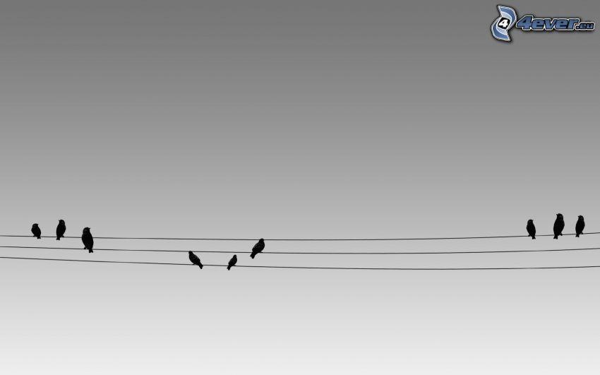 birds, wires